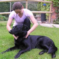 dog treatment