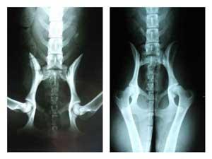 Flossy x-rays